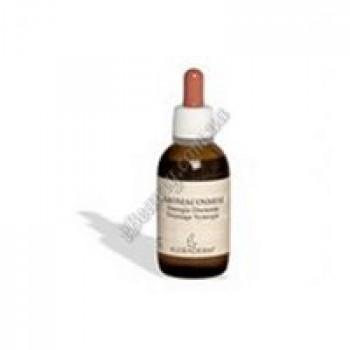 Локальный лечебный концентрат  «Чайное дерево+Прополис+Лаванда»  для лечения воспалений (эффект скорой помощи) / Propolis+Lavander+Tea Tree oil Kleraderm, 20 ml